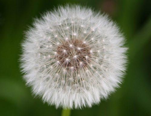 Naturheilkunde: 5 Tipps, wie du die Ursache deiner Allergie behandeln kannst